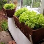 Vertical Gardening mitt Balkonkästen