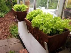 Vertical Gardening mit Balkonkästen