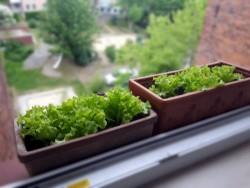 Vertical Gardening am Fenster